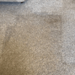 carpet cleaning | STB Cleaning